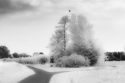 Photograph - Enchantening Spring-3 by Casper Cammeraat