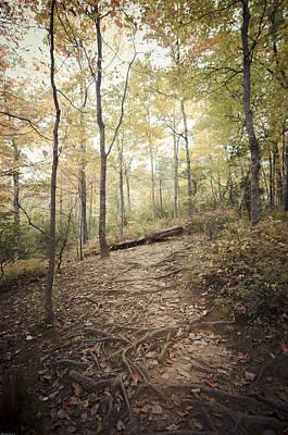 Enchanting Forest Art Print by Debbie Karnes