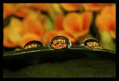 Photograph - Enchanting  by Michaela Preston
