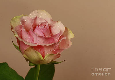 Enchantment Art Print by Inspired Nature Photography Fine Art Photography