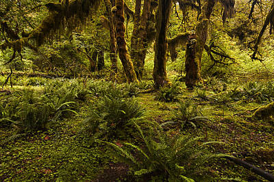 Olympic National Park Photograph - Enchantment by Mark Kiver