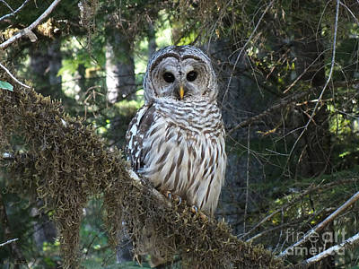 Photograph - Encounter With An Owl by Heike Ward