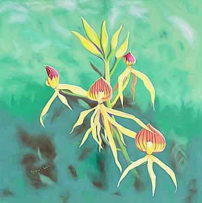 Encyclia Cochleata Orchid Art Print by Joyce Small