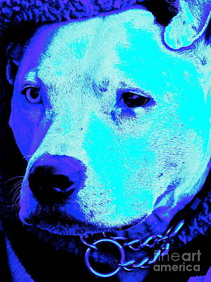 End Dog Fighting  Art Print by Q's House of Art ArtandFinePhotography