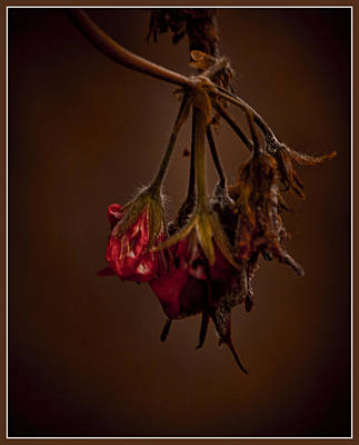 Photograph - End Of Life by Ron Roberts