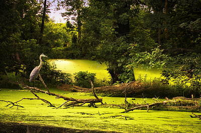 Nature Center Pond Digital Art - End Of Path Merged Image by Thomas Woolworth