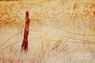 Photograph - End Of Summer Along A Rural Fence Line by Jackie Farnsworth