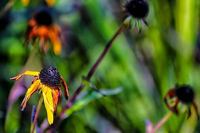 Photograph - End Of Summer by Beth Akerman