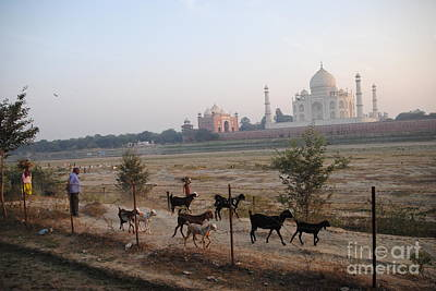 Photograph - End Of The Day At Mehtab Bagh by Jacqueline M Lewis