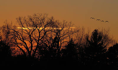 Moody Trees - End of the Day by Patti Deters