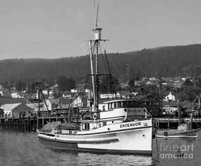 Photograph - Endenavor Purse Seiners California Circa 1940 by California Views Archives Mr Pat Hathaway Archives