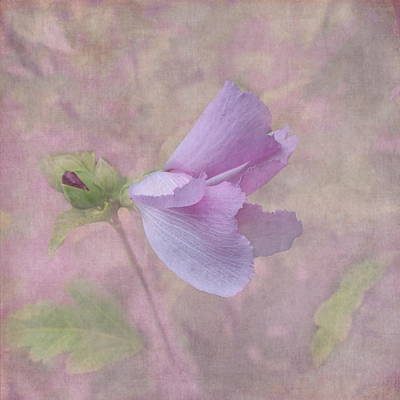 Rose Of Sharon Photograph - Ending Gracefully by Angie Vogel