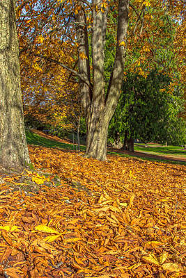 Photograph - Ending Of Fall by Bob Noble Photography