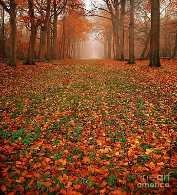 Forrest Photograph - Endless Autumn by Jacky Gerritsen