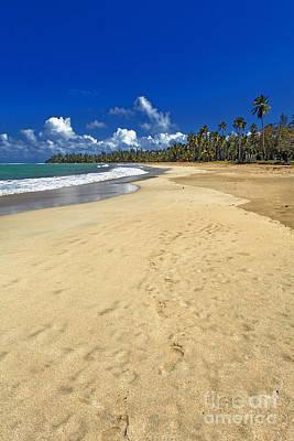 Endless Caribbean Beach Art Print by George Oze