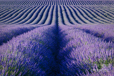 Photograph - Endless Rows by Brian Jannsen