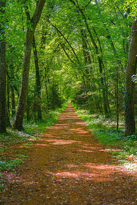 Photograph - Endless Trail Into The Forest by Nila Newsom