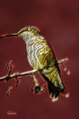 Photograph - Hummingbird - Surreal - Energy At Rest by Barry Jones