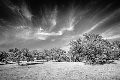 Photograph - Engelmann Oak Meadow by Alexander Kunz
