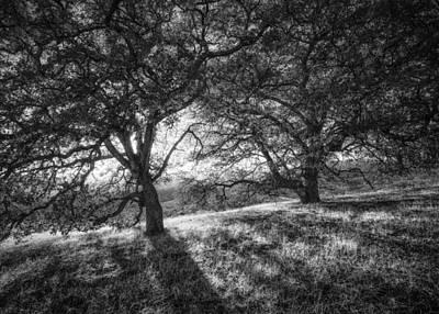 Photograph - Engelmann Oaks by Alexander Kunz