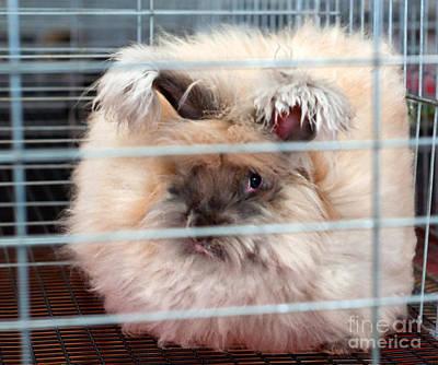 Photograph - English Angora Rabbit In Cage by Valerie Garner