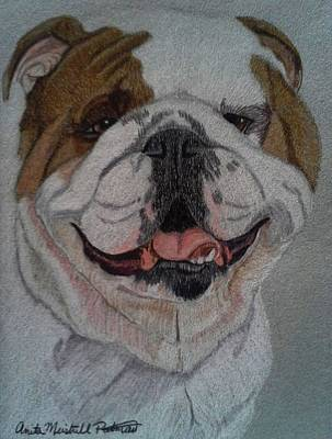 Drawing - English Bulldog II by Anita Putman