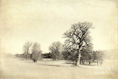 Bleached Tree Photograph - English Countryside Vintage by Jane Rix