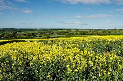 Photograph - English Farming by Stephen Taylor