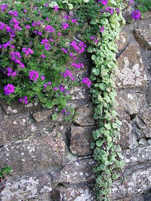 Photograph - English Garden Wall by Bev Conover