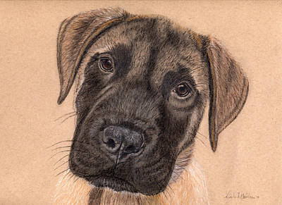 Drawing - English Mastiff Puppy by Nicole I Hamilton