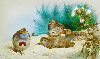 Retro Painting - English Partridge With Gorse And Thistles by Celestial Images