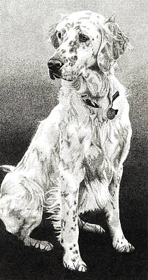 Drawing - English Setter by Rob Christensen