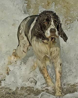 Breed Digital Art - English Springer Spaniel by Larry Linton