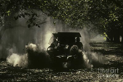 Walnut Tree Photograph - English Walnut Harvest by Ron Sanford