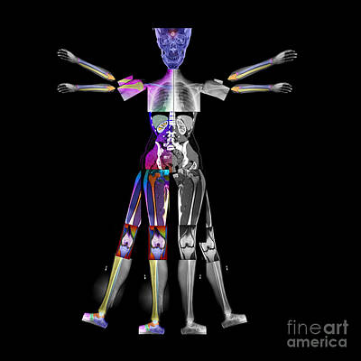 X-ray Image Photograph - Enhanced Composite Imaging Of Modern Man by Living Art Enterprises