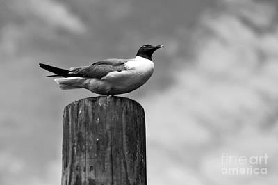 Photograph - Enjoying The Day Mono by John Rizzuto