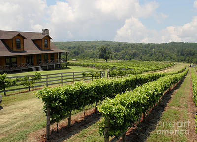 Grapevine Photograph - Enoch's Vineyard by Paul Anderson