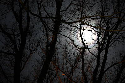 Entangled In The Moonlight Art Print by Judy Powell