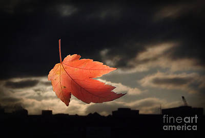 Photograph - Enter The Fall by Eddie Lee