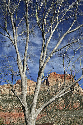 Photograph - Entering Zion Country Springdale Ut by SC Heffner