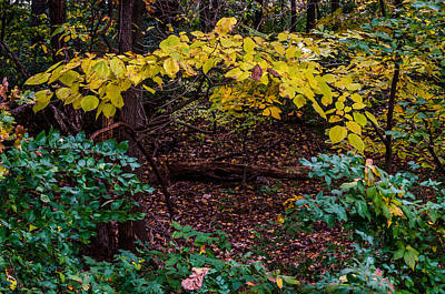 Photograph - Entrance To The Forest by Debra Martz
