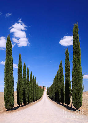 Tuscany Italy Photograph - Entrance To Villa Tuscany - Italy by Matteo Colombo