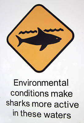 Photograph - Environmental Conditions Make Sharks More Active In These Waters by Ramona Johnston