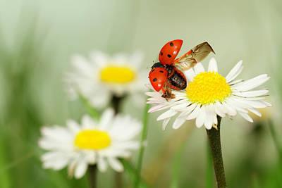 Ladybug Wall Art - Photograph - Envole Moi by Fabien Bravin