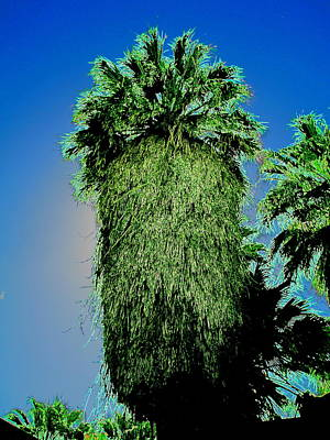 Photograph - Eons Palms by Randall Weidner