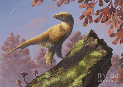 Eosinopteryx Brevipenna Perched Print by Emily Willoughby