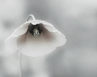 Gentle Photograph - Ephemeral Beauty by Piet Flour