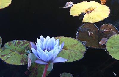 Lotus Leaves Photograph - Ephemeral Ghostly Lily by Douglas Barnett
