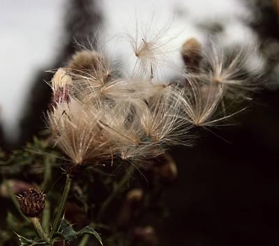 Photograph - Ephemeral Wild Flowers by Amanda Holmes Tzafrir