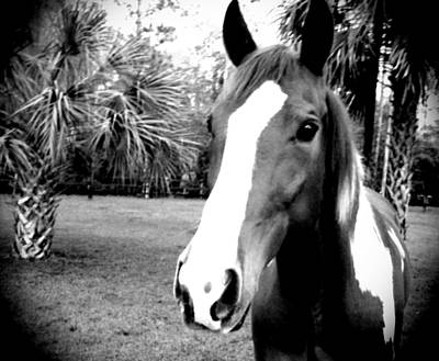 Photograph - Equine Beauty by Chasity Johnson
